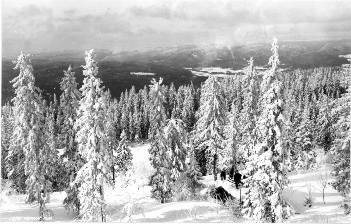 Utsikt fra Tryvannshøgda, Oslo 1936. Vinterbilde med snøtunge trær.