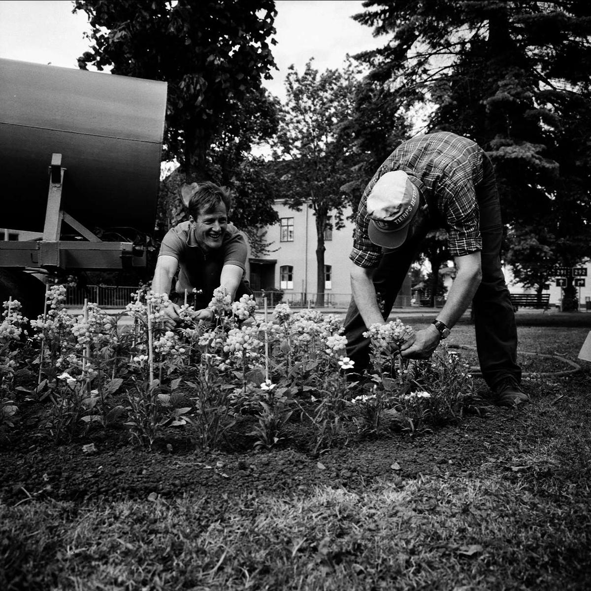 """Glädjens blomster i Tierps parker"", Tierp, Uppland juni 1973"