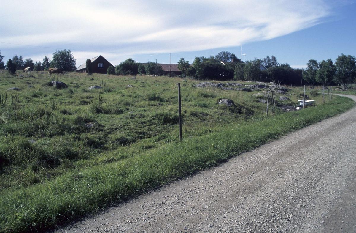 Betesmark och byväg, Göksnåre, Hållnäs socken, Uppland 2000