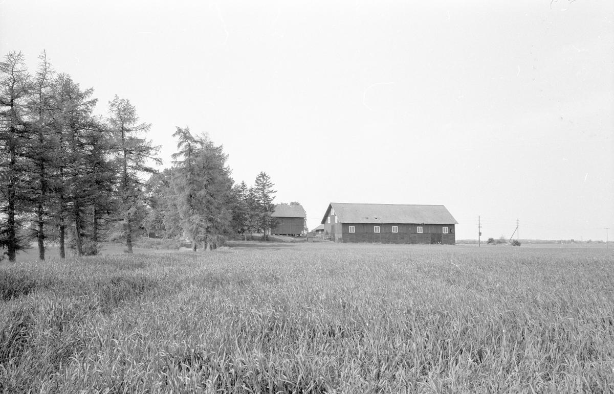Vy från norr över Stora Skärna, Fullerö 22:2, Gamla Uppsala socken, Uppland 1977