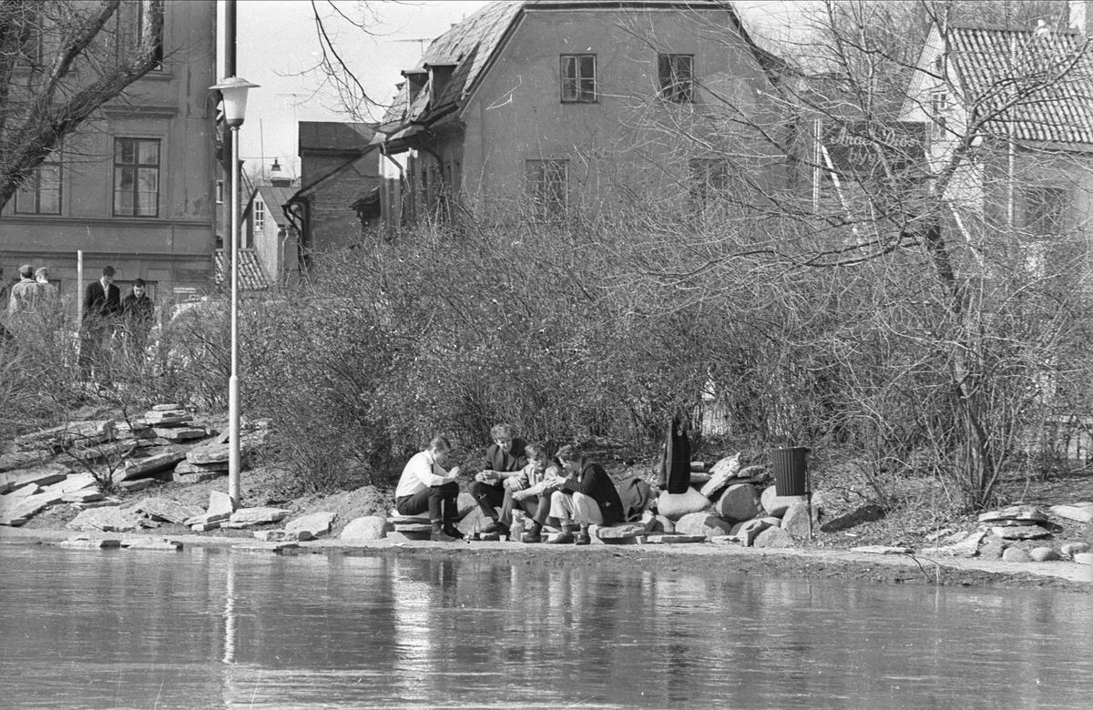 """""""Polis och fyllon"""" vid Fyrisåns strand, Uppsala 1966"""