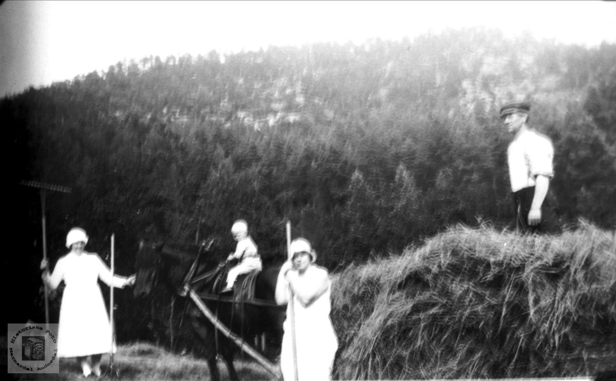 """Høyonn på """"Der nede"""" Homme, Bjelland."""