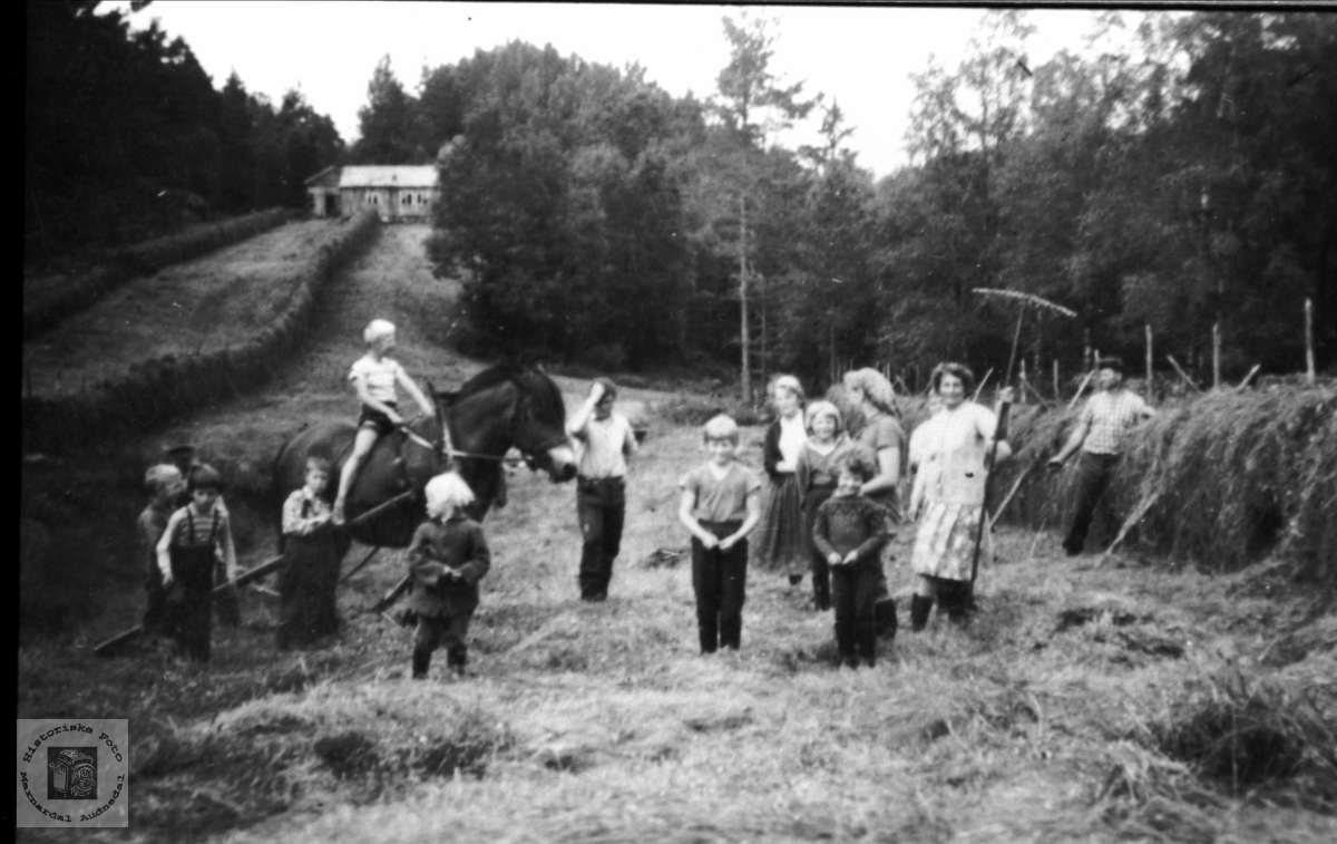 Slåttonn på Veabu, Øyslebø.