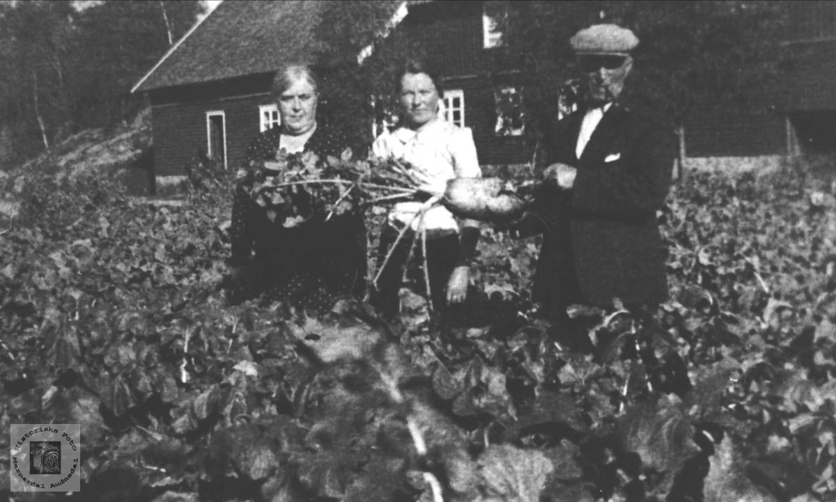 Roehøsting på Bue, Øyslebø.