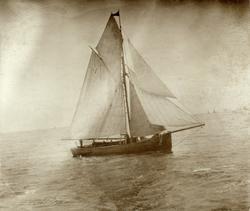 No. 33. Sköite for bankfiske - regattaen Aalesund 1898