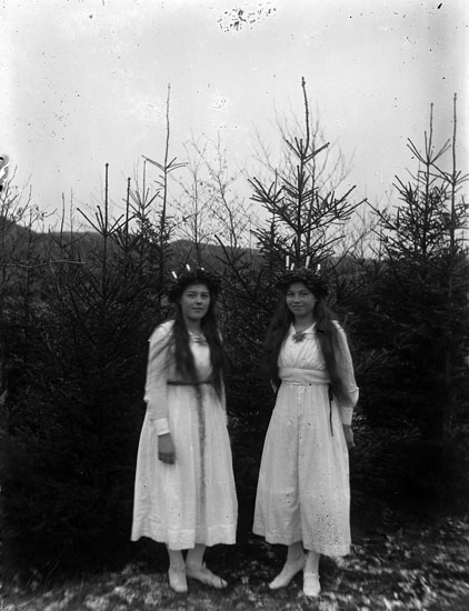 Två lucior mot en fond av granar år 1919