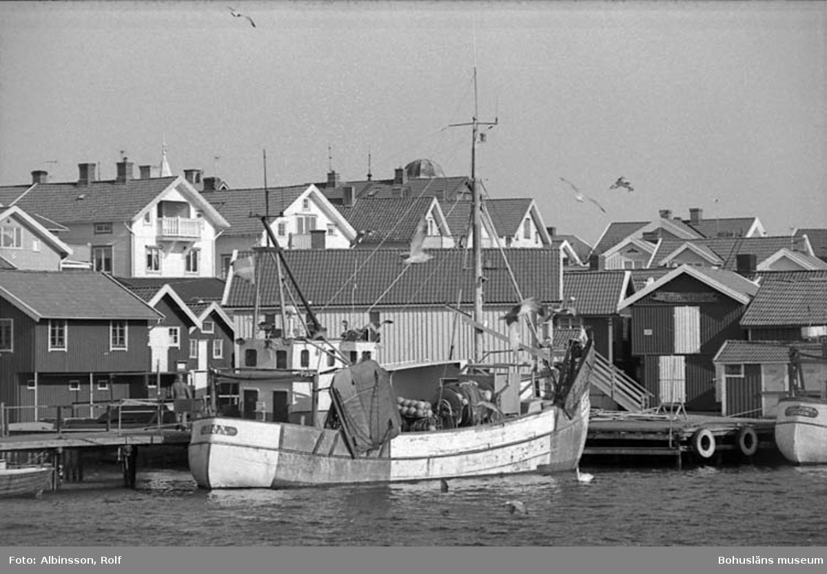 """Enligt fotografens noteringar: """"Äran ligger i Smögenhamnen. I akterna flaggor på halv stång. Alla båtar i hamnen hedrar förre fiskaren Robert Berndtzen som idag jordfästes.""""  Fototid: 1996-03-14  1996-03-15"""