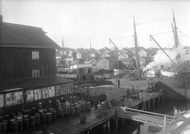Smögens hamn omkring 1920
