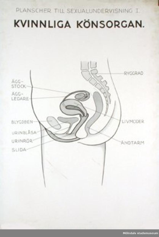 Biologi.Planscher till sexualundervisning 1.Kvinnliga könsorgan.