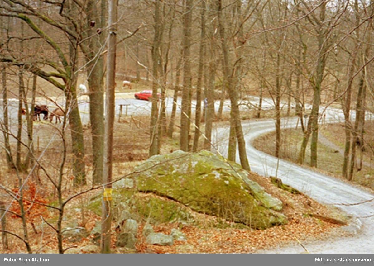 Skog med hage i bakgrunden där det går några hästar, samt en parkerad bil. Till höger slingrar sig en grusväg fram.