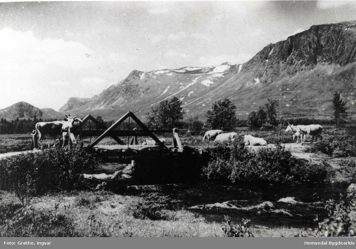 Buskap (bøling) ved Hestanåne 1940-1950.