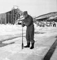 Isskjæring på Møkkelandsvannet, 1954. Johnny Jensen, Møkkela