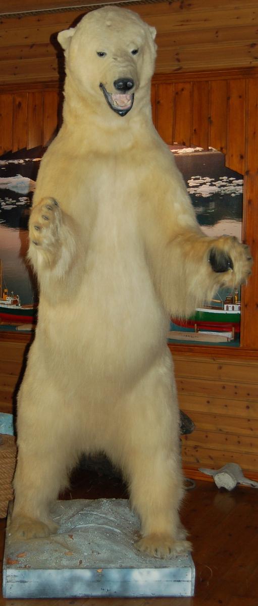 Gjenstanden er ein utstoppa isbjørnhann som står oppreist, montert på ein sokkel.