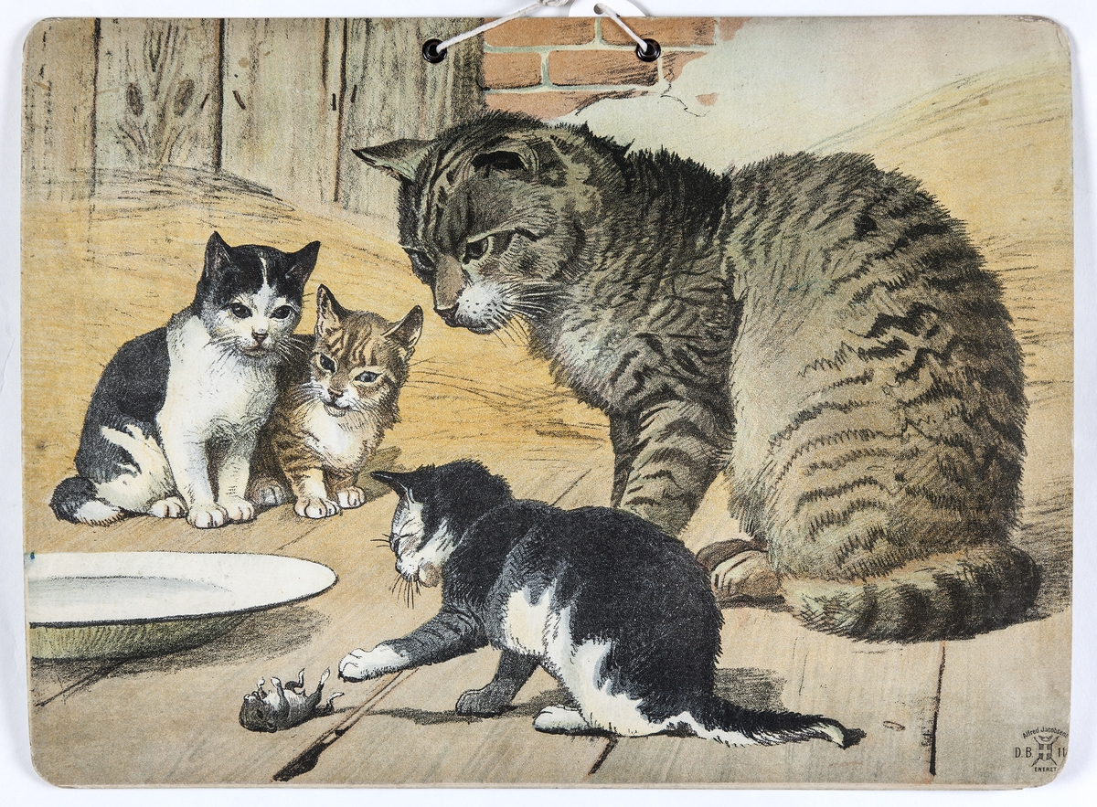 Skoleplansje, naturfag. Illustrert på begge sider, forestiller svaner (nr. 150) og katt med unger.