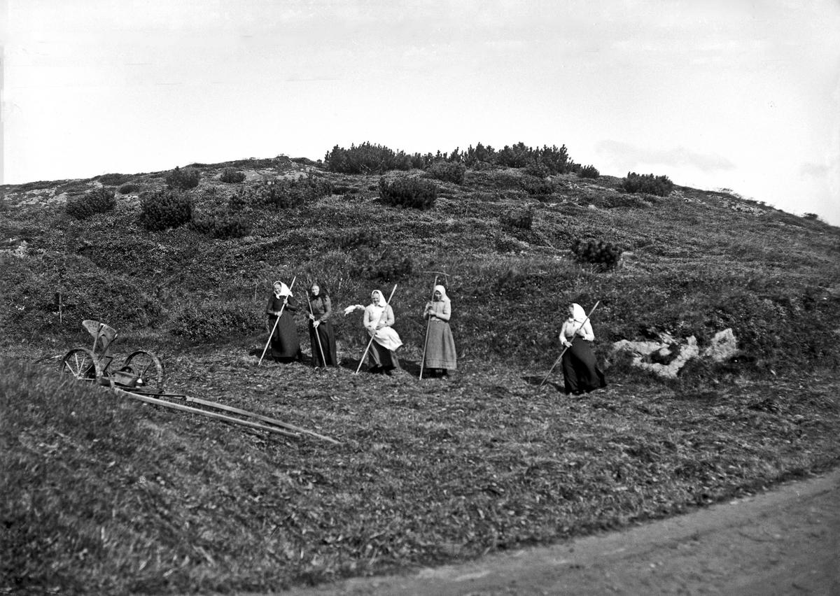 Landskap - Innhøsting.