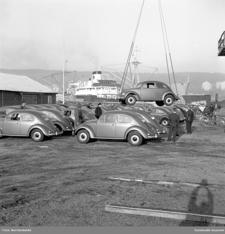 Lossning av bilar i Sundsvalls hamn. En efter en lyfts folkvagnsbubblorna ur båten och radas upp på kajen.
