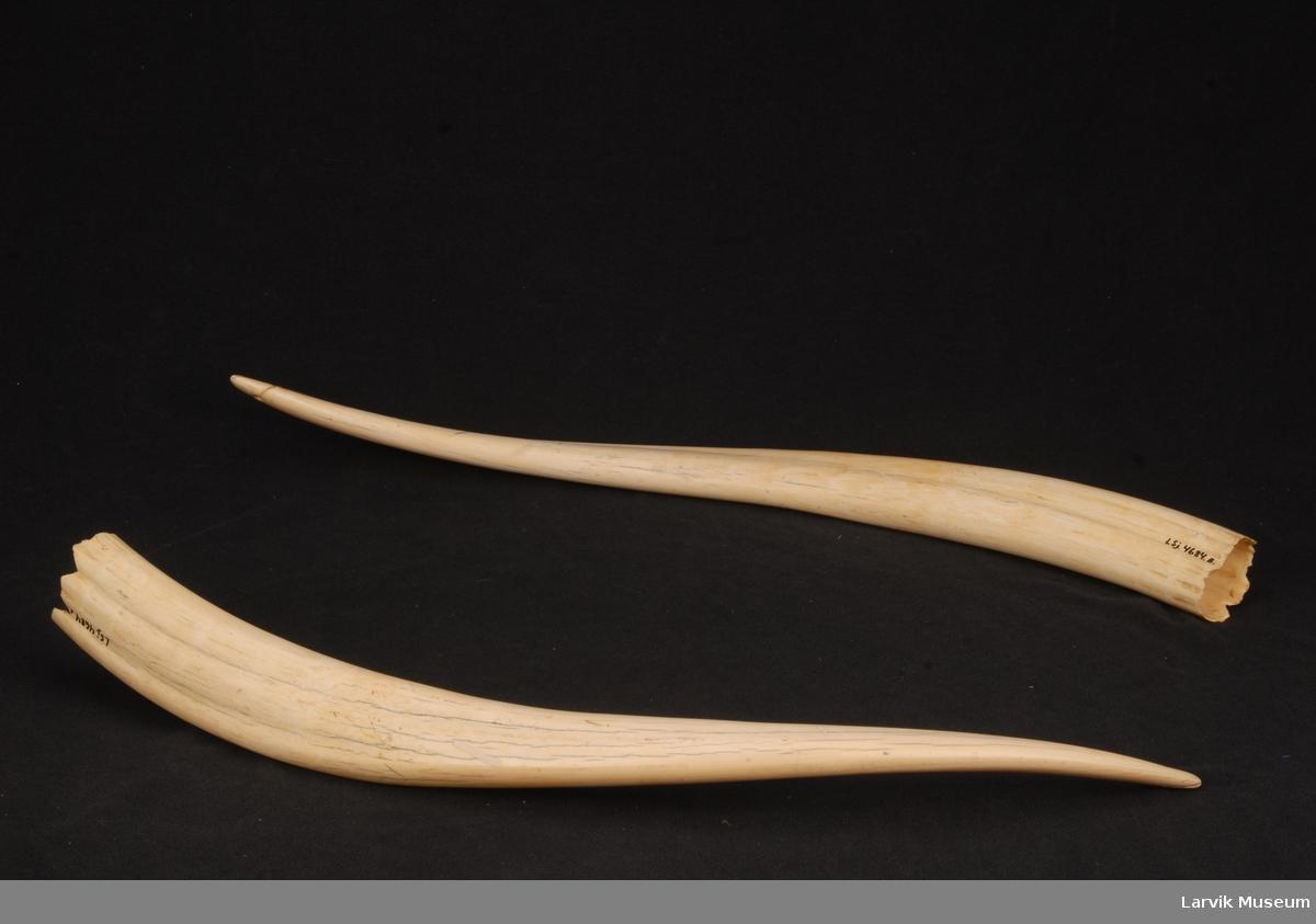 Et par støttenner ant. hvalross
