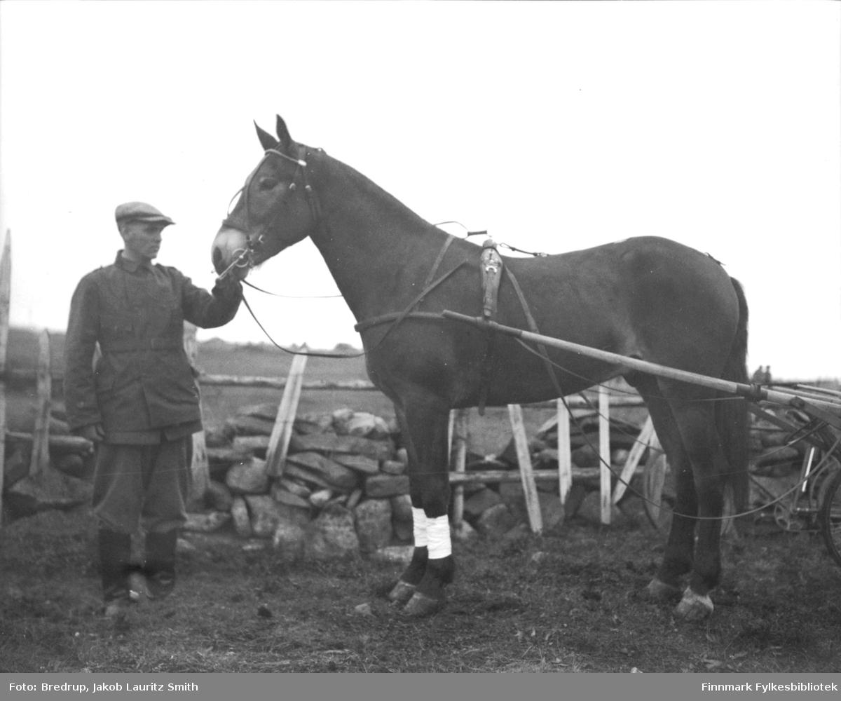Erling Lebesby holder fullblodshesten og stortraveren 'Bravo II'  - eier kjøpmann Ole Nilssen fra Vadsø.  Bildet er tatt ved huset til Lilleng i indrebyen i Vadsø i 1933.  Steingjerdet gikk rundt huset.