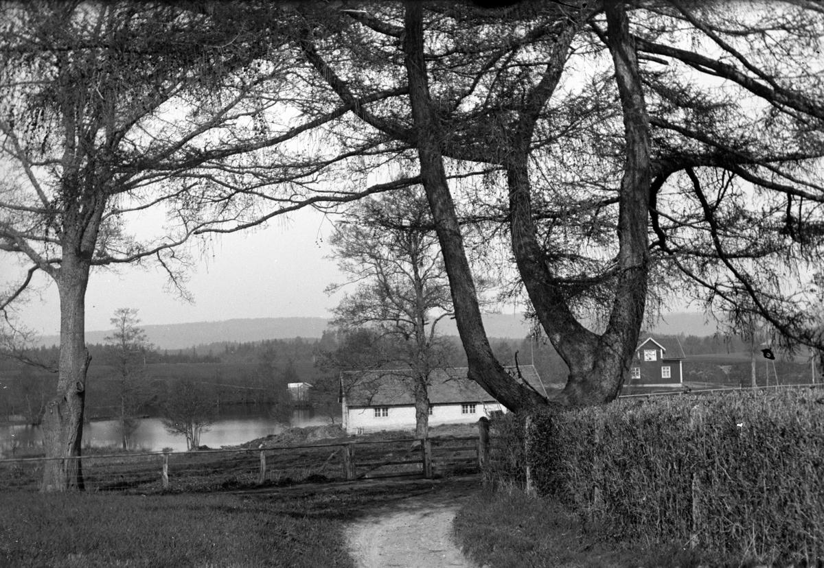 Ett hus ligger vid en liten sjö, en väg går förbi en häck och stora träd.