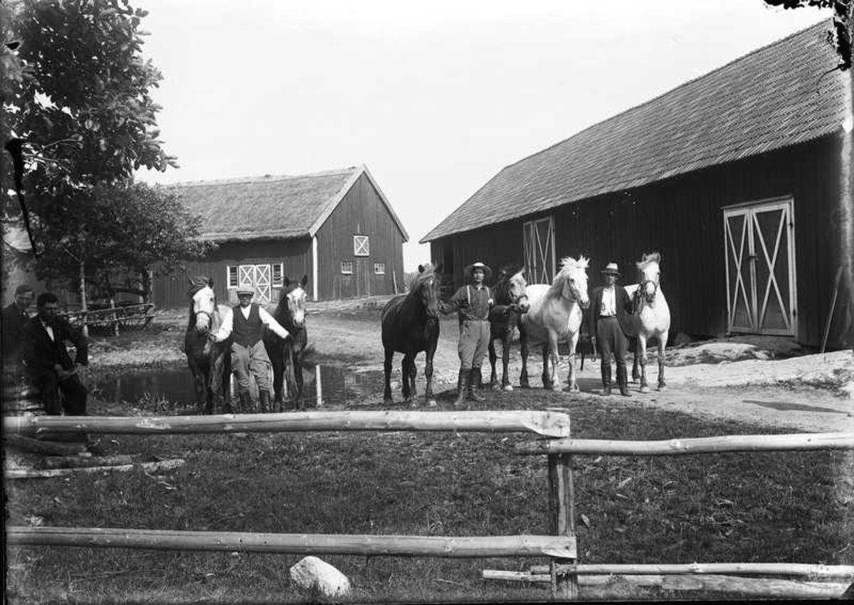 Hästarna visas upp.