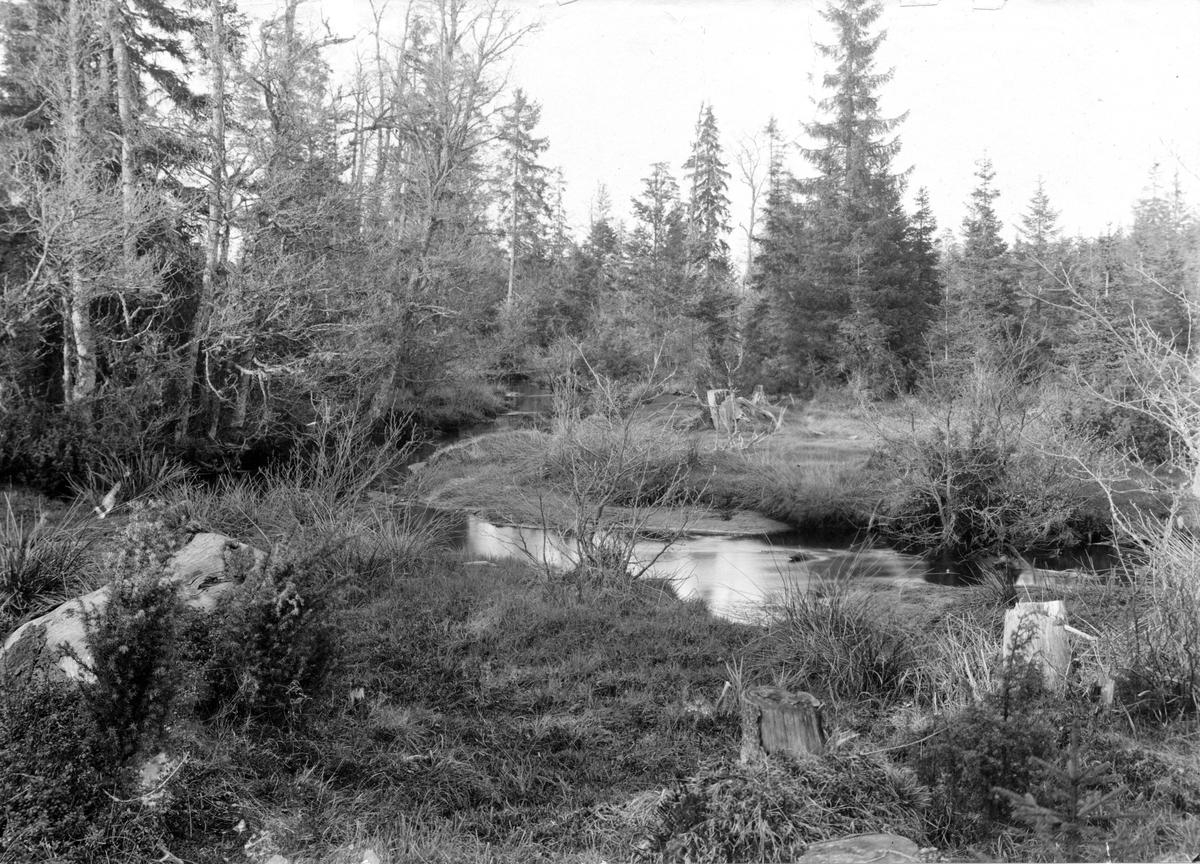 Biotop för skogssnäppa, Totanus ochropus, Jönköping 12/5 1911