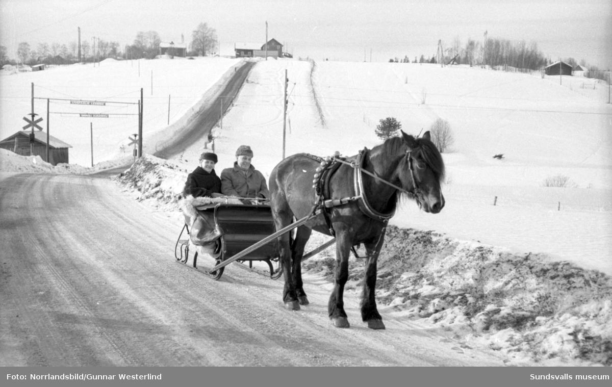 Vinterbilder från Sundsvallstrakten till ett reportage om hur man firar fettistagen. Skidåkning, friluftsliv och semlor.