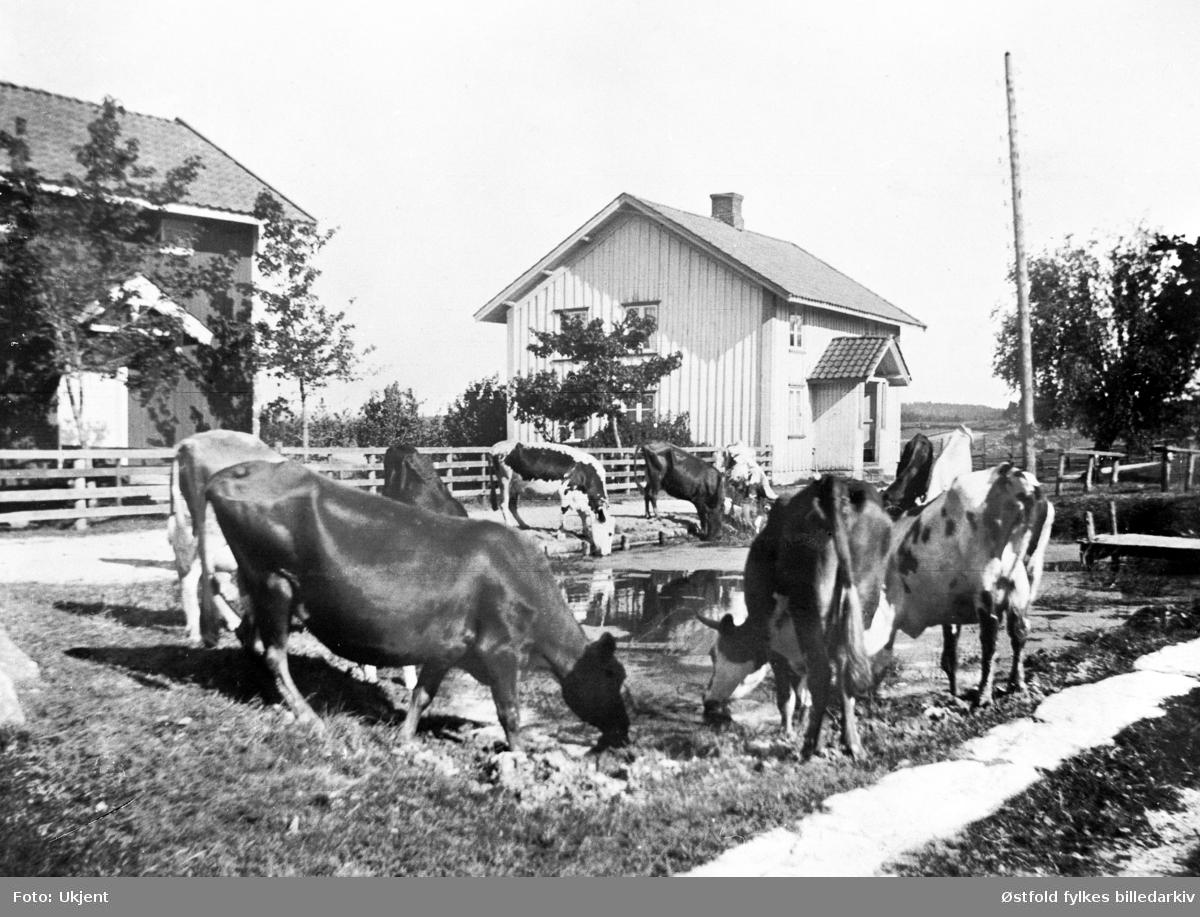 Fra gården Finnestad søndre i Rakkestad, ca. 1915-20. Kuene vannes i gårdbrønnen.