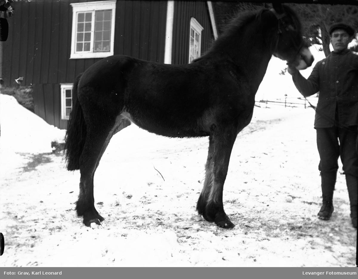 Husdyr, brun hest på tunet