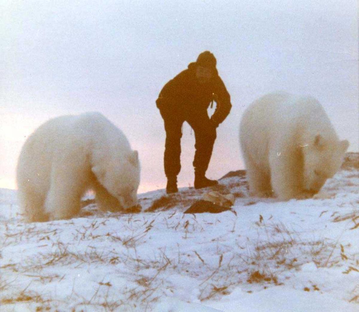 Landskap. En person og to isbjørnunger som trives i hverandres selskap. Ungene er ca 2 år gamle og ble kalt Esro1 og Esro2. Bildet tatt påska 1968.