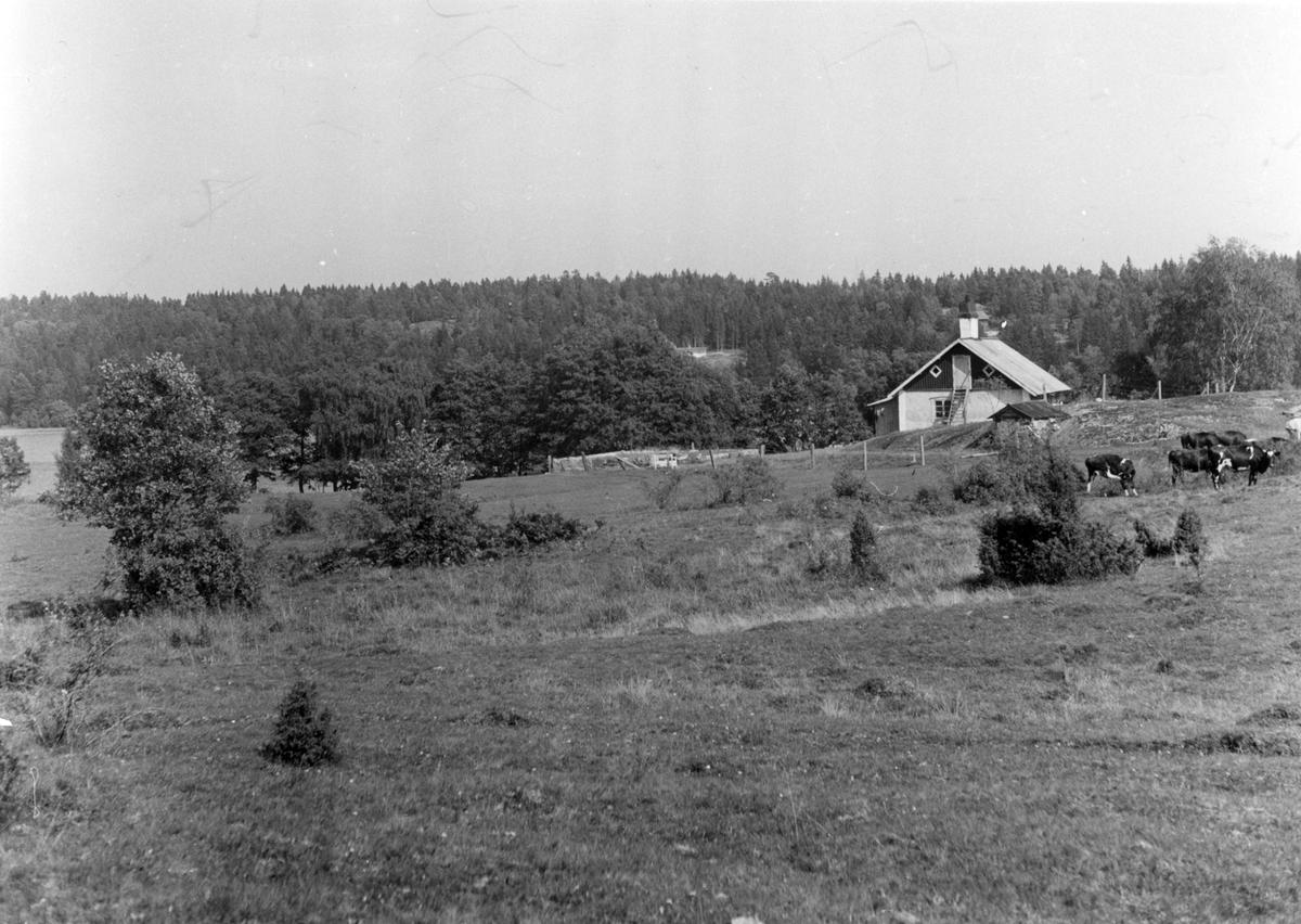 Övrigt: foto i juni 1948