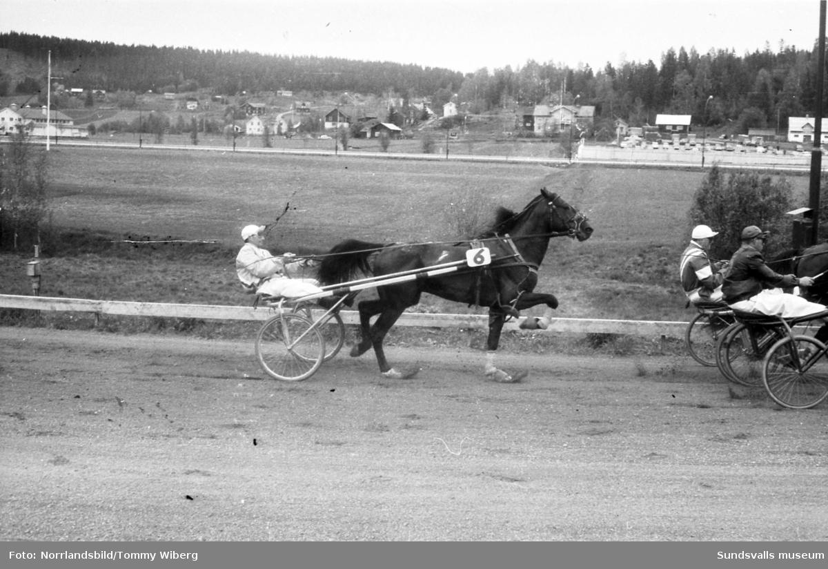 Bilder från en tävlingsdag på Bergsåkers travbana.