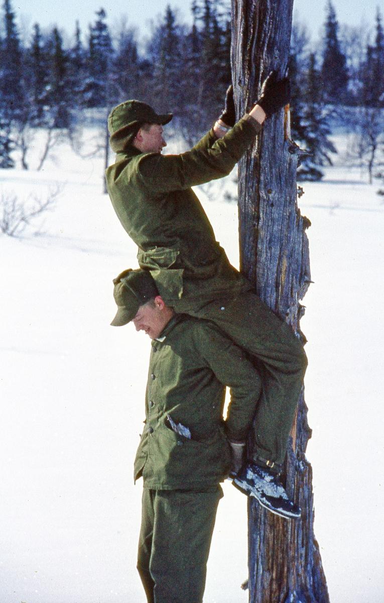 Värpliktiga samlar ved för att göra upp eld under vinterövning. I 21 Västernorrlands Regemente.