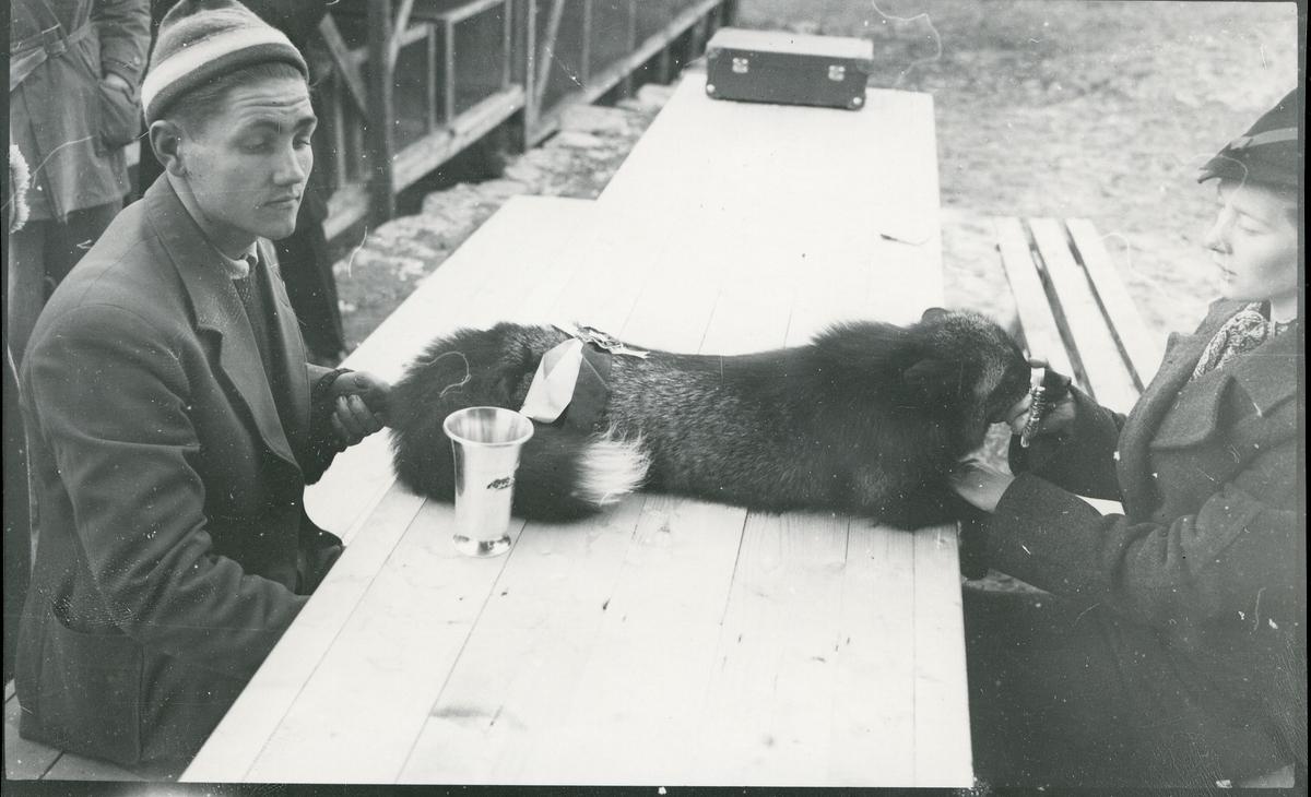 Carl og Aaslaug Flaaten, Beitostølen og kvinne med sølvrev og pokal mellom seg på et bord, trolig i forbindelse med pelsdyrutstilling. Flaaten hadde revefarm.