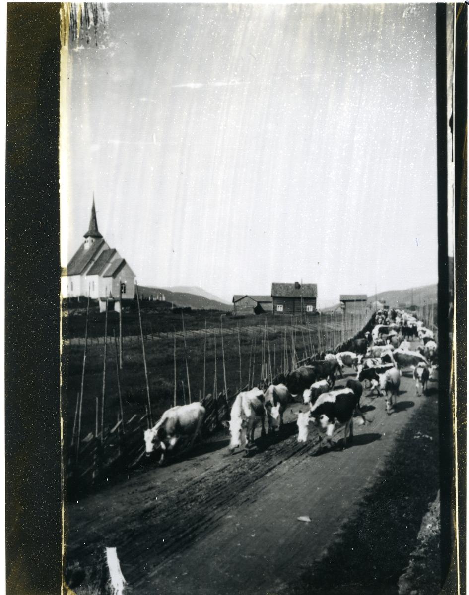 Fedrift mot sør gjennom Ulnes, Ulnes kyrkje til venstre, og husa til Tore Ulnes til høgre.