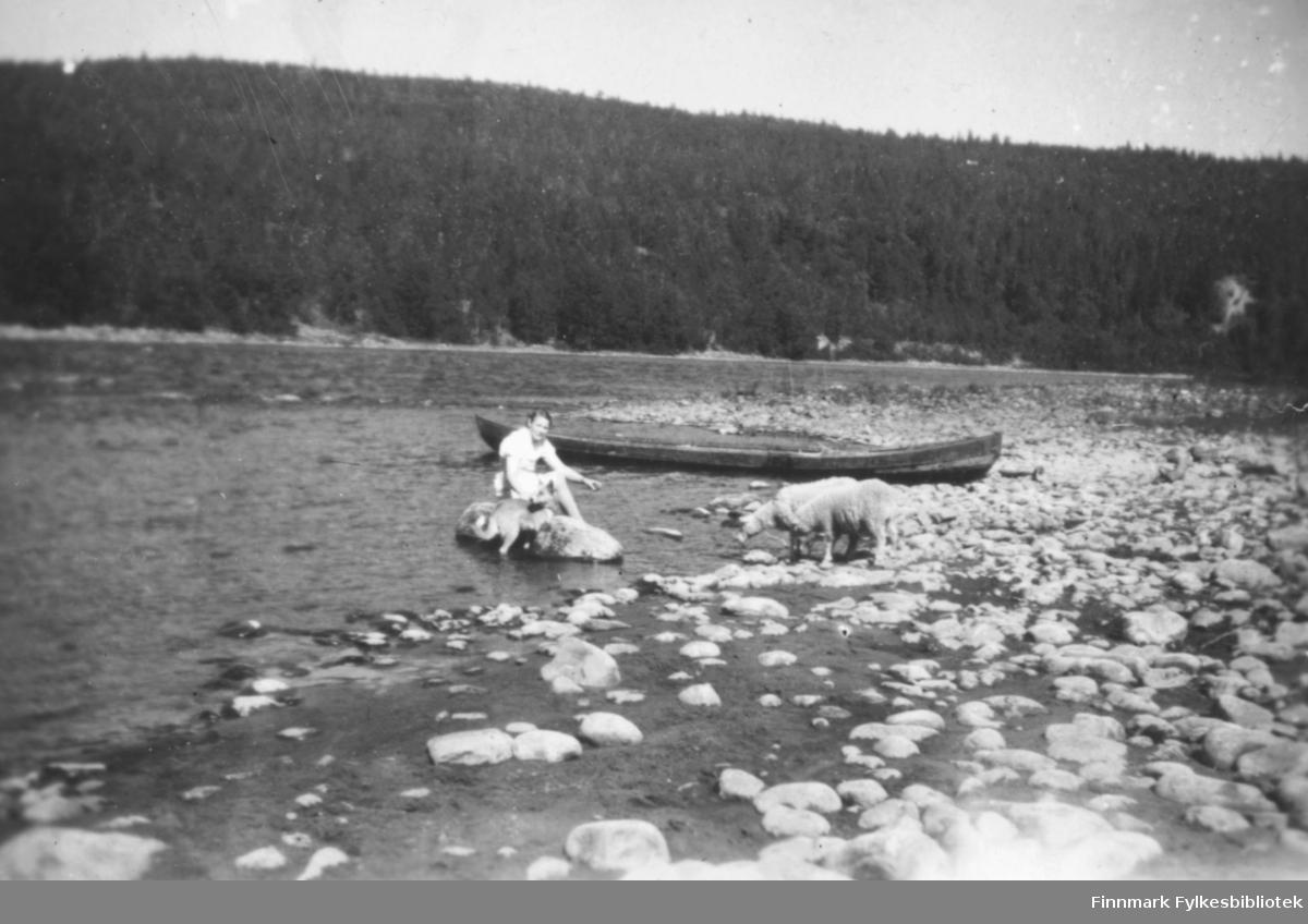 Altaelvas bredd. Vi ser en kvinne sittende på en stein i vannkanten, ved siden av seg har hun en hund. Bak henne er en elvebåt trukket opp på elvebredden. To sauer står nede ved vannkanten. Til venstre og bakenfor ser vi Altaelva. I bakgrunnen ser vi granskog. Ca.1930-40.