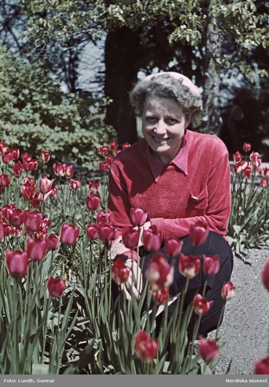 Kvinna i röd tröja vid trädgård med röda tulpaner.