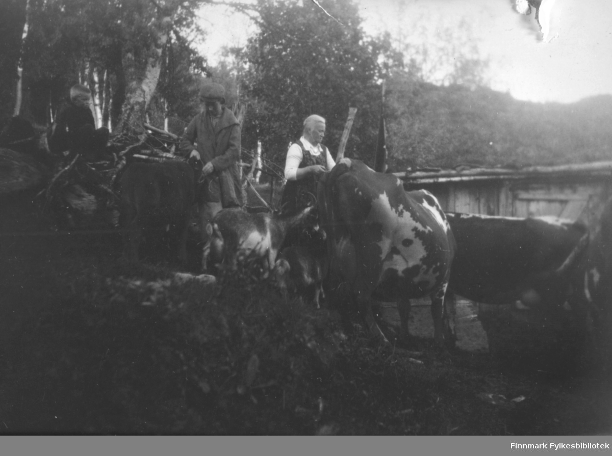 To damer steller dyra. Det er to kyr og en kalv. En gutt sitter litt lengre opp blant trærne til venstre på bildet. Han har mørke klær på seg. Damen i midten har kåpe og et hodeplagg på seg. Hun til høyre har en hvit, kortermet bluse og en kjole/forkle med skulderstropper på seg. Det er mye, ganske store trær på området og øverste del av et bygg kan ses helt til høyre på bildet.