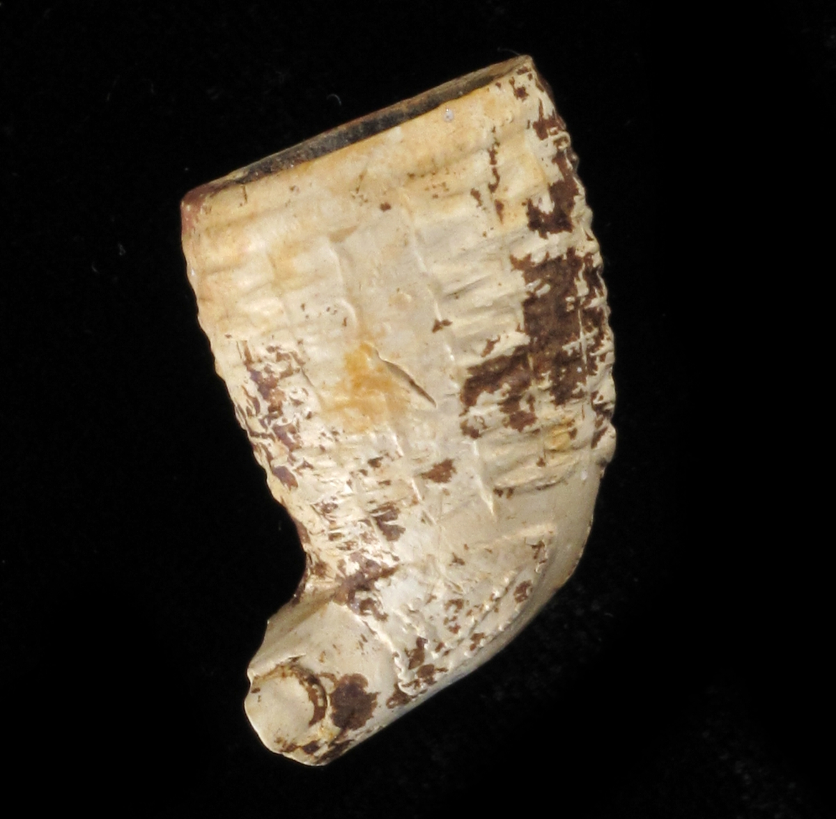 To skjold, Goudas bystempel./ to skjold i relieff med perlerand,/ r