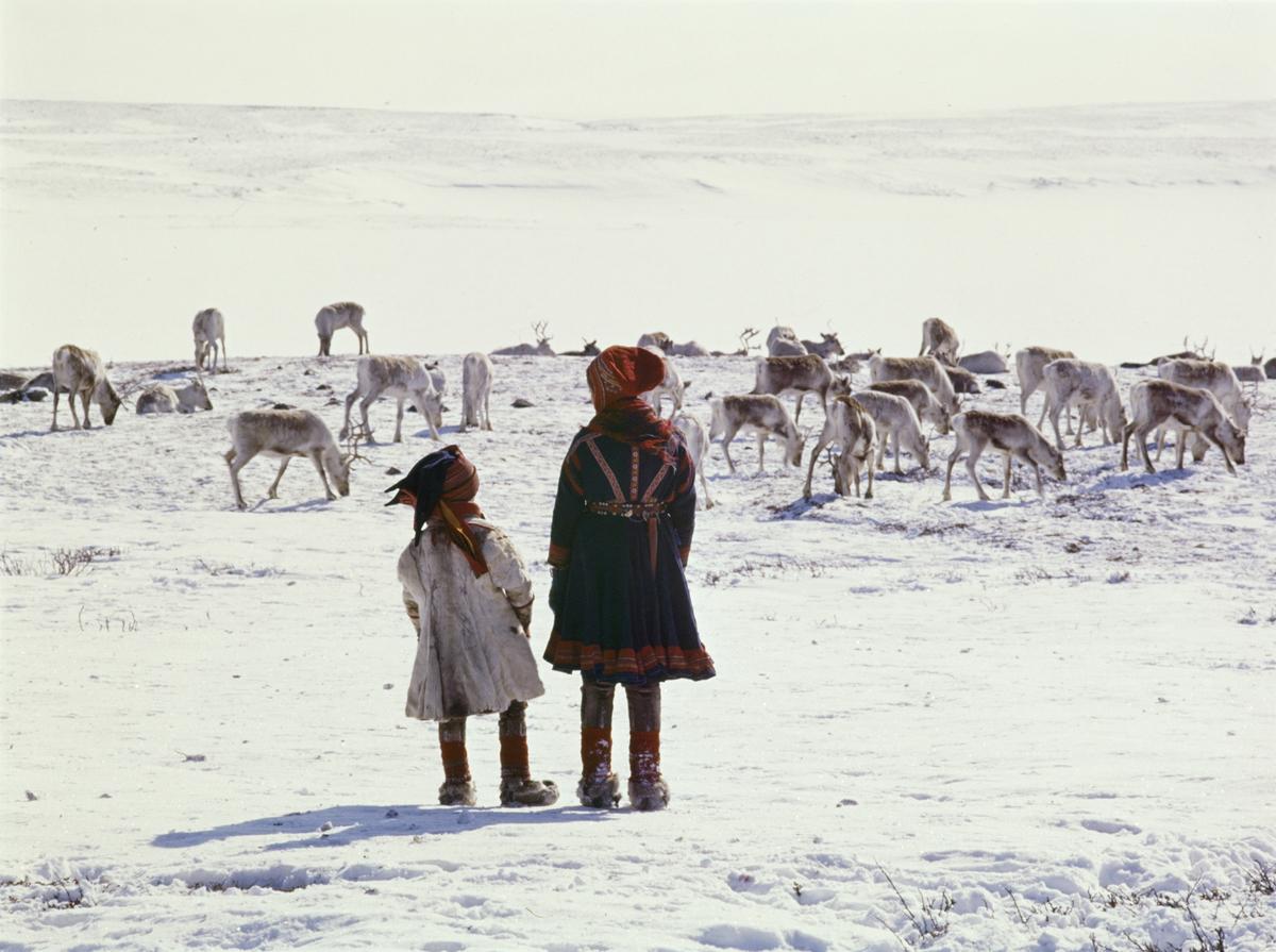 Samer og reinsdyr på snødekt vidde..