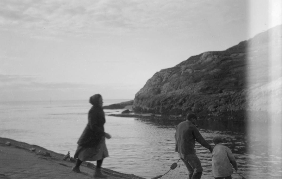 Skoltesamer fisker i osen av Grense Jakobselv. Garna settes ut på fjærasjø dragtau. Drog det når det flødde og laksen gikk opp. På bildet er det 1 kvinne og 2 menn som drar i garnet.