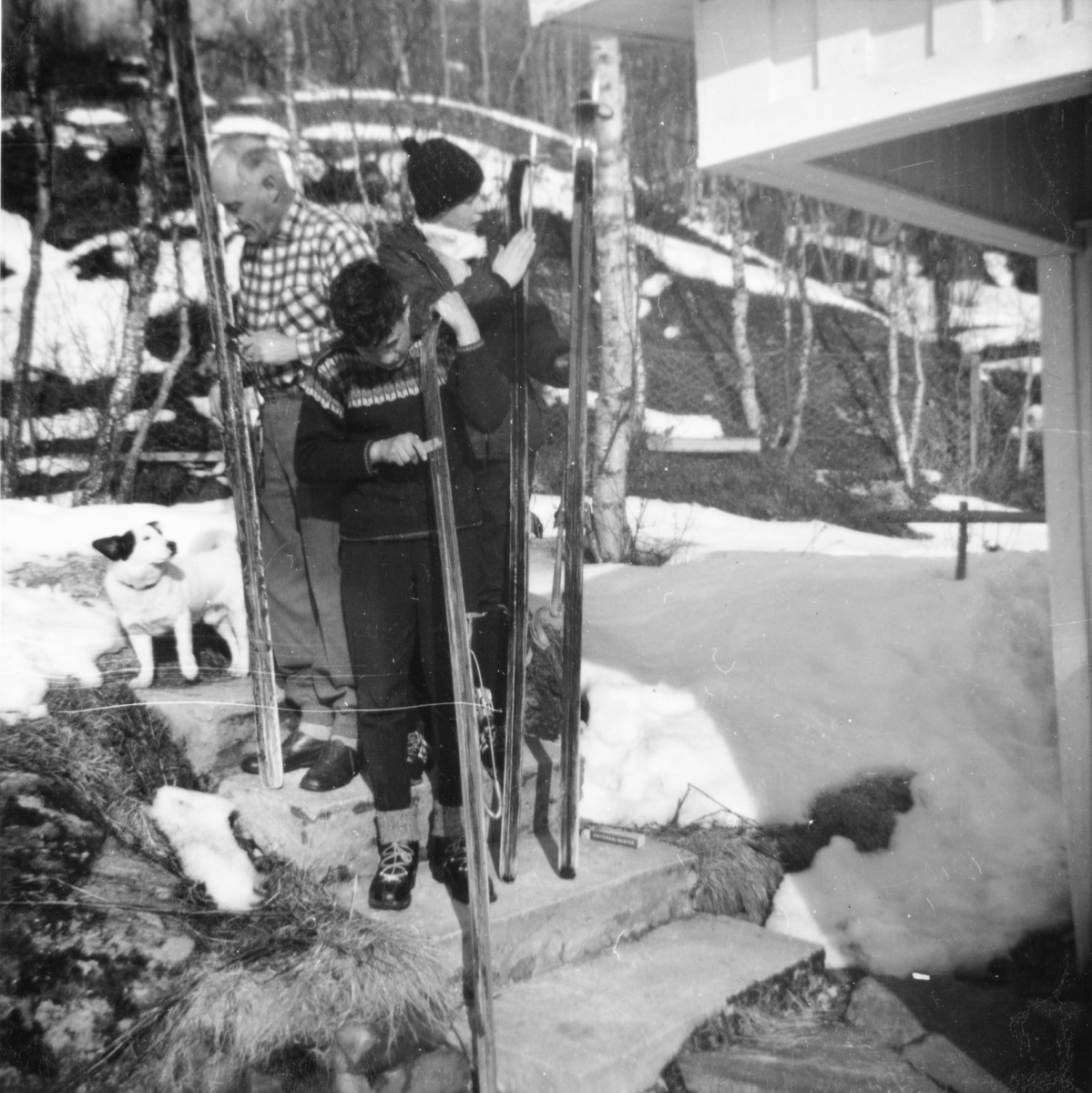 Tre karer smører ski. Hund til venstre.