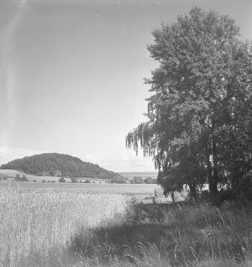 Granhogen, Högås socken. Utsikt mot Svälte kile.