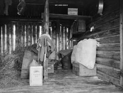 Interiør fra det såkalte «piskhuset» i ei stallkoie i Nord-T
