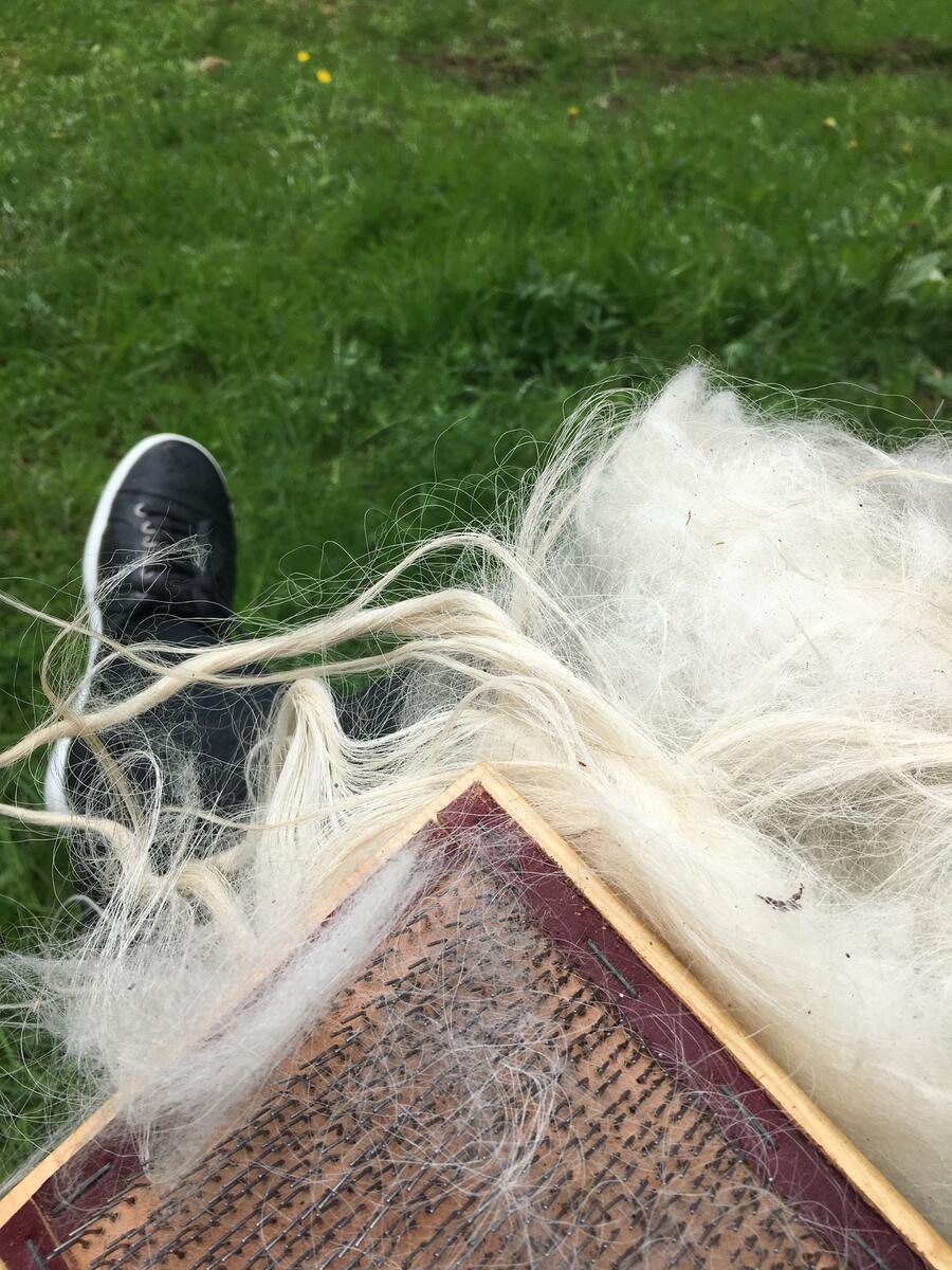 karding av ull (Foto/Photo)