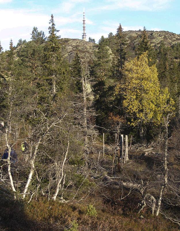 Skjerp Nr. 17 er det nordligste og høyestliggende, 1,3 km sør for Jonsknuten, 729 moh. (Foto/Photo)