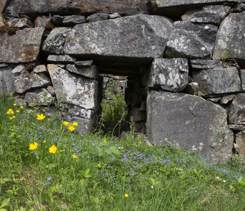 Engsoleie og forglemmegei foran inngangen til Kronprinsens kunsthjulstue. (Foto/Photo)
