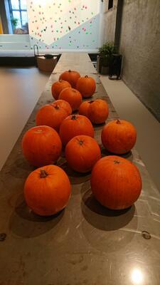Halloween i Geolaben (Foto/Photo)