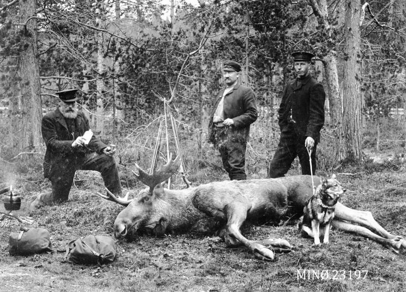 Fra venstre Paul Karlsrud, Peder Cornelius Bachke, Per E Berg. Elgen ble skutt i Vangrøftdalen og kjørt til Os, bildet er tatt der Os alders-og sjukehjem ligger i dag. Fotograf Bredalslien har tatt bildet, ca 1903-04. (Foto/Photo)