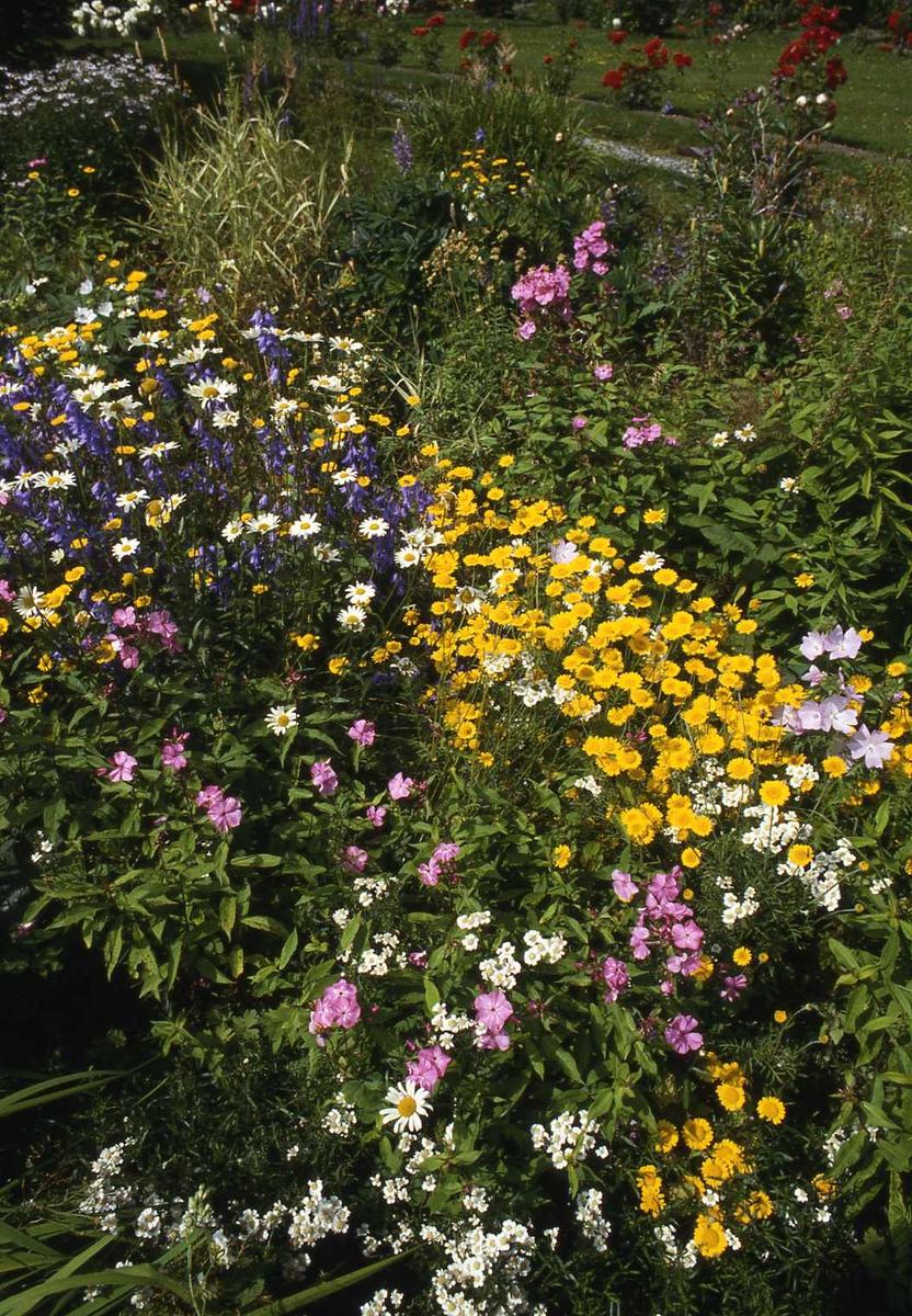 DOK:1990, hage, blomsterbed, markblomster, sommer,