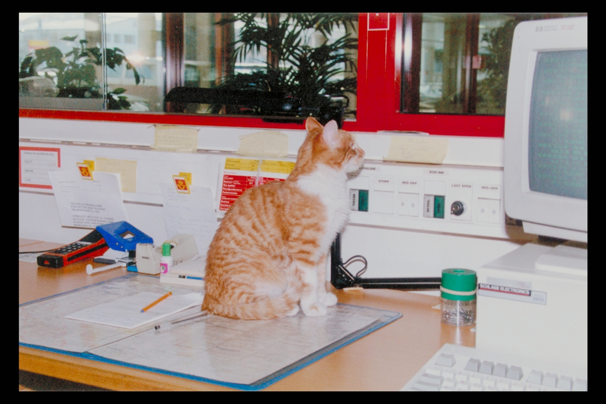 interiør, postterminal, Bergen, kontor, katt